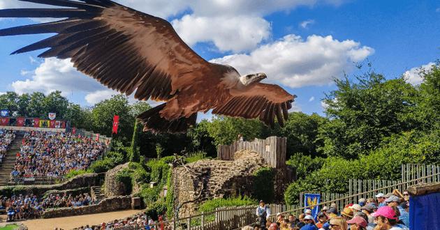 Aigle survolant un public