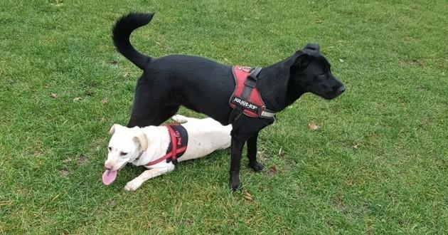 retrouvailles chiens russe malinka chernichka