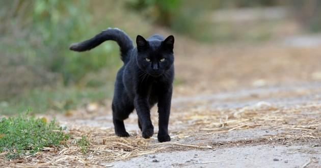 chat perdu retrouvé 15 ans après