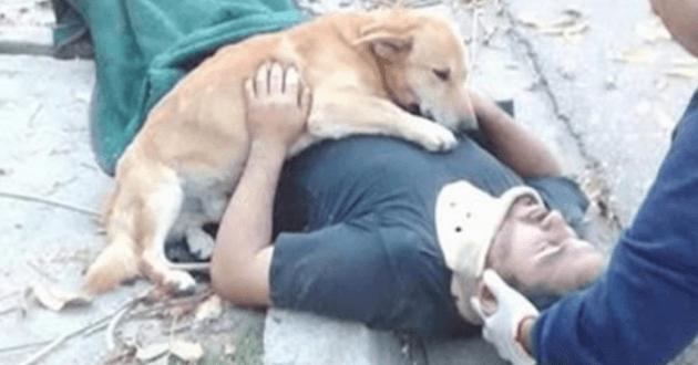 Le chien protégeant son maître