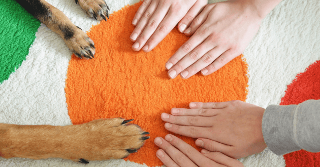 Mains et pattes tendues les unes vers les autres