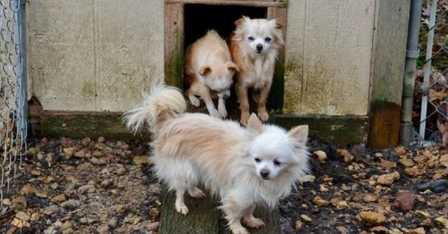 chiens sauvés usine à chiots