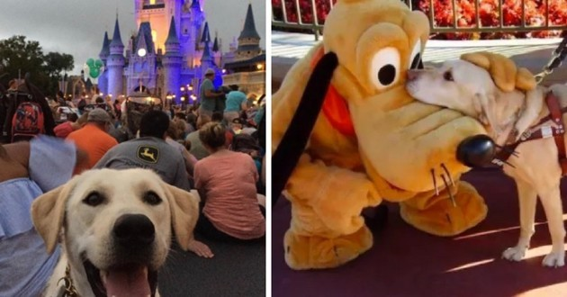 chien disney world