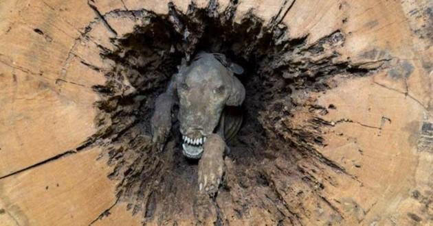 chien coincé tronc d'arbre musée