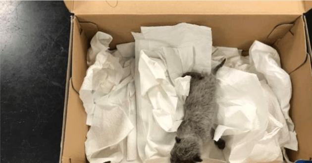 Le chaton trouvé dans une boite