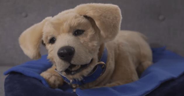 Voici Jennie, le premier chien-robot de compagnie