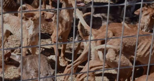 Les chiens vivaient sans eau ni nourriture