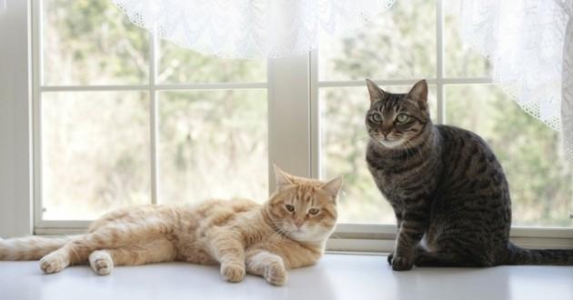 chat à la maison