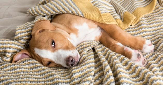 chien malade rhume