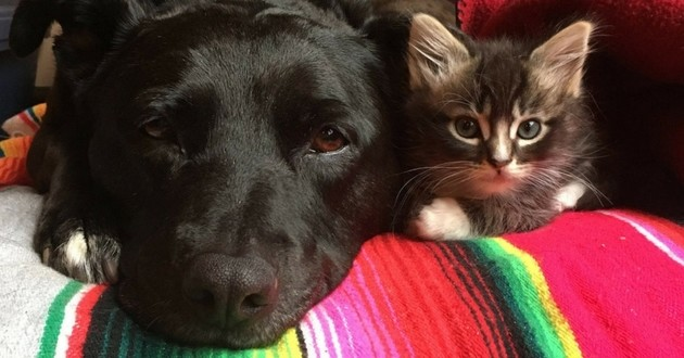 chatons et chienne