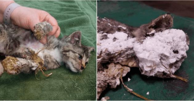 Ce chaton enseveli de mousse a été sauvé par des éboueurs