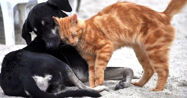 Chats et chiens devraient être mieux protégés