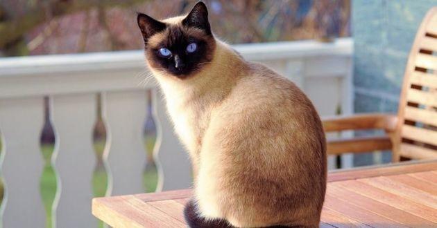 Bientôt un chat à la Maison Blanche ?