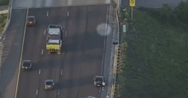 Le chien s'est enfui sur l'autoroute
