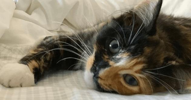 Naomi, l'un des chatons