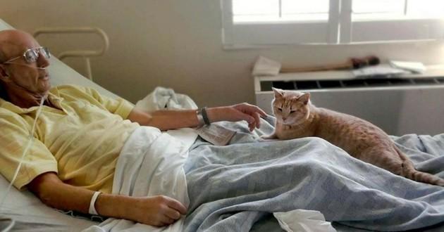 chat centre medical vétérans