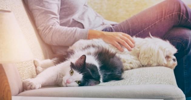 propriétaire chien chat