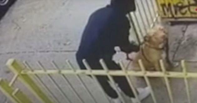 Ce maître a été filmé en train d'abandonner son chien