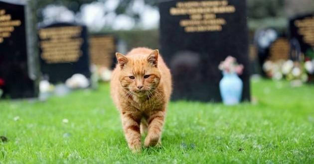 Barney le chat cimetière