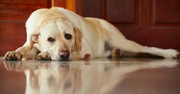 chien triste seul