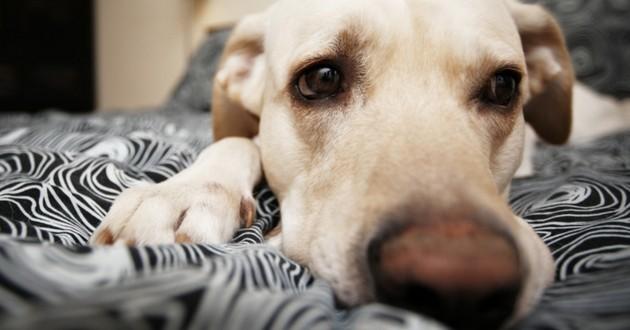 chien flair lit