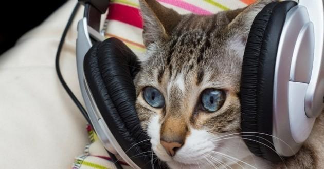 chat écoute musique