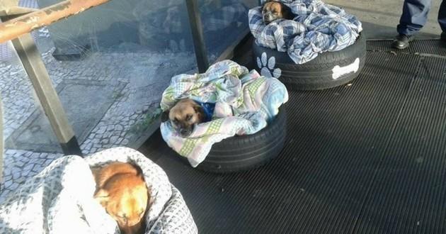chiens errants gare routière Brésil