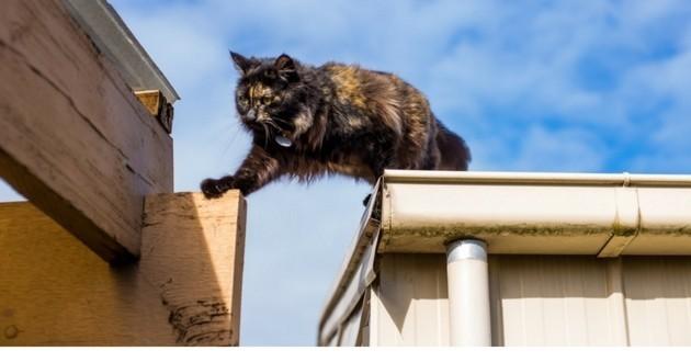 chat gouttière