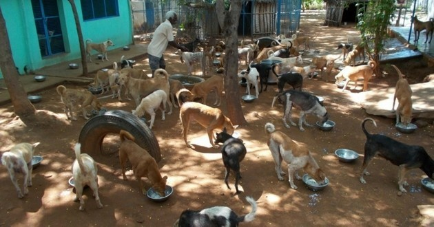 Arunachala Animal Sanctuary and Rescue Shelter