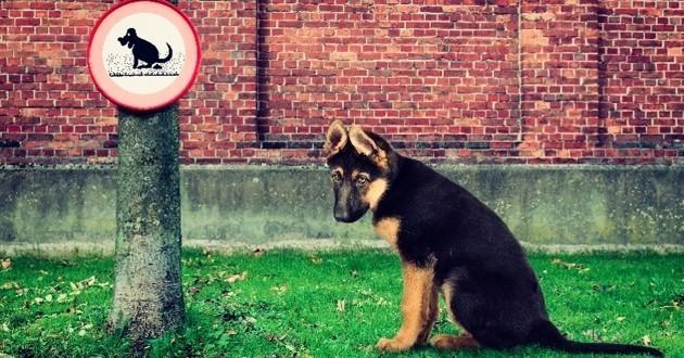 SCOOP : La Mairie de Paris aurait trouvé le moyen de se débarrasser des crottes de chien !
