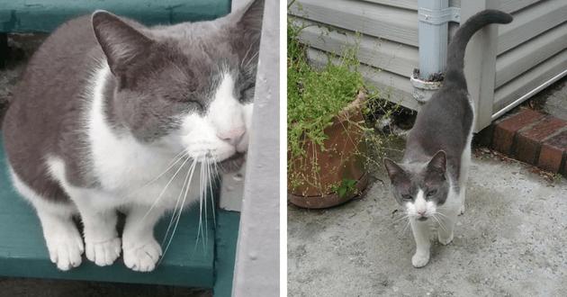 chat gris blanc sauvé