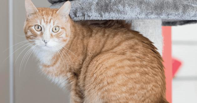 La stérilisation chez les chats