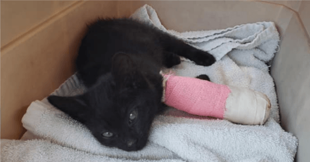 Le chaton après son opération
