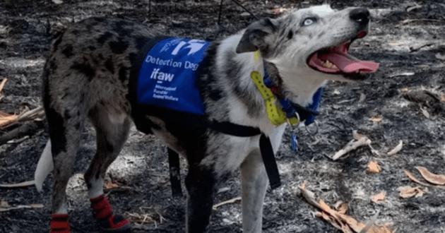 Ce chien héroïque pourrait bien être la prochaine star Disney