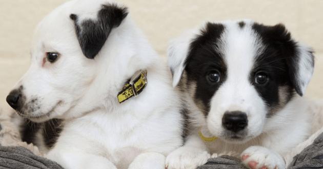 Cette association stoppe les adoptions de chiens durant les fêtes pour une triste raison