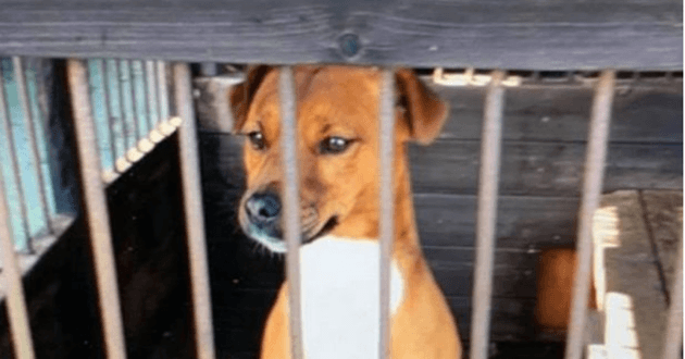 Le Jack Russel avant son kidnapping