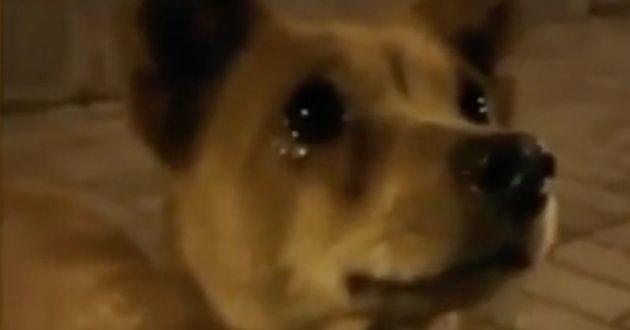 chien en train de pleurer