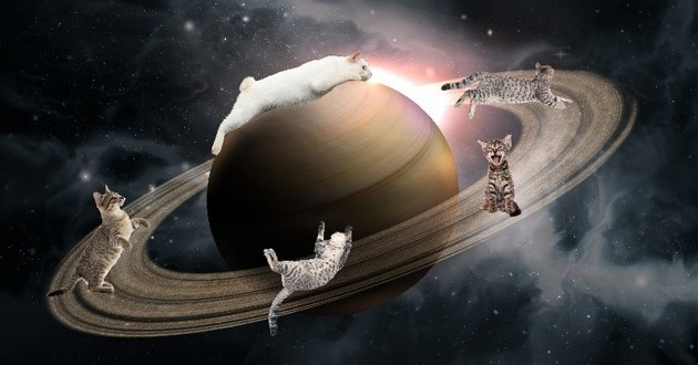 chats saturne