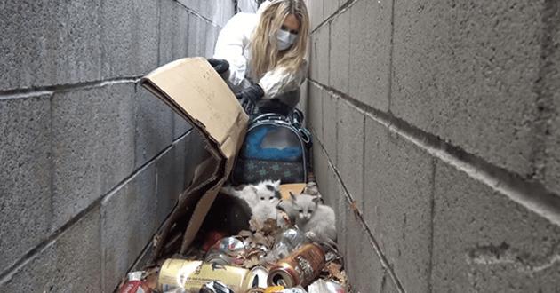 Sauvetage chatons