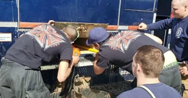sauvetage chat dans un camion