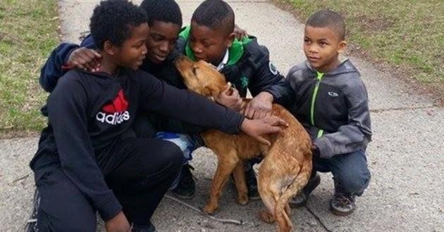 Quatre garçons héroïques sauvent la vie d'un chien abandonné dans d'atroces conditions