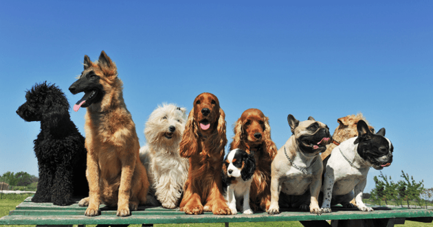 Plusieurs chiens tous côte à côte sur une plateforme