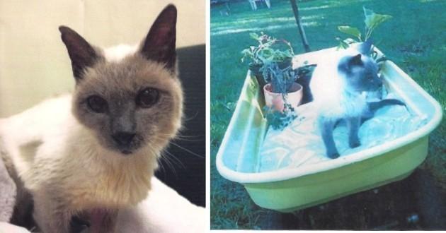 Scooter plus vieux chat en vie