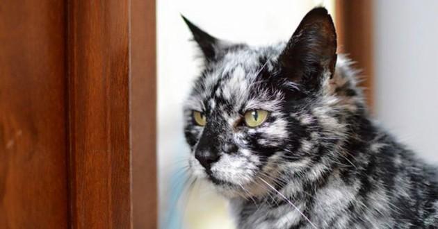 chat vitiligo
