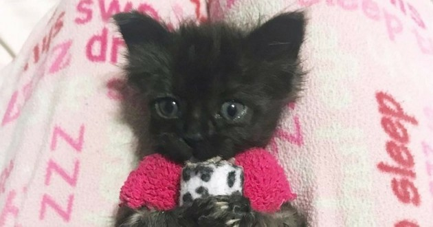 chaton chaussette pull
