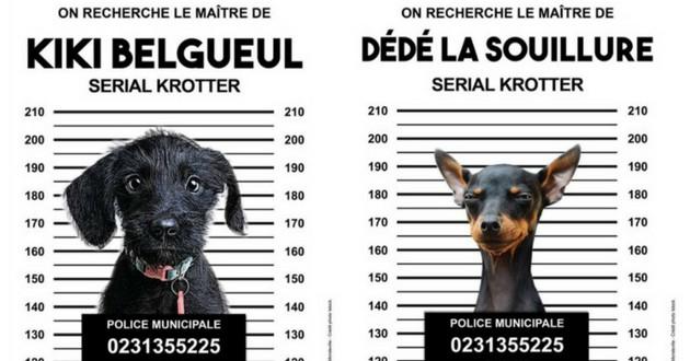 campagne contre déjections canines mondeville