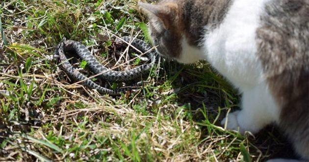un chat et un serpent dans l'herbe