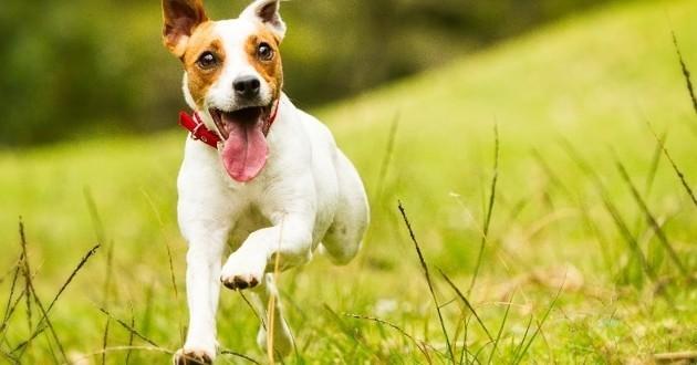 Les raisons d'adopter un chien en refuge