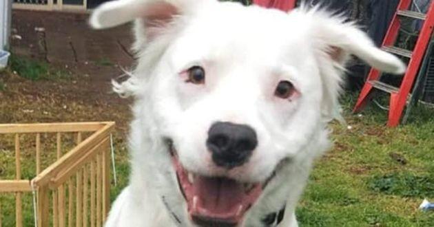 Shiro le chien blanc malentendant et malvoyant