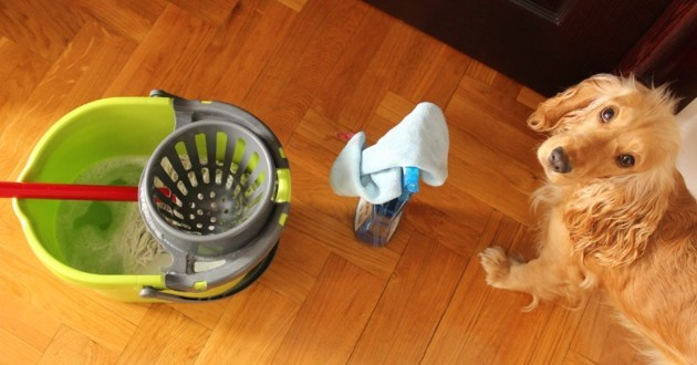 chien et produits nettoyants